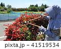 生垣の剪定 41519534