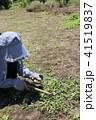 草刈り 41519837
