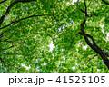 新緑イメージ 41525105