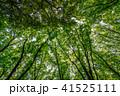 新緑イメージ 41525111