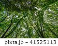 新緑イメージ 新緑 木の写真 41525113