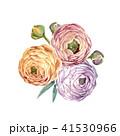 ラナンキュラス フラワー 花のイラスト 41530966