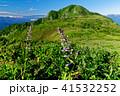 雨飾山 高山植物 山の写真 41532252