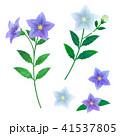 桔梗 素材セット(紫と白) 41537805