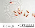 金魚 魚 泳ぐの写真 41538888
