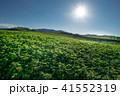 風景 丘 北海道の写真 41552319