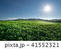 風景 丘 北海道の写真 41552321