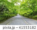 京都・二尊院・紅葉の馬場・青もみじ 41553182