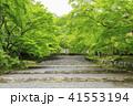 京都・二尊院・紅葉の馬場・青もみじ 41553194