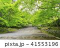京都・二尊院・紅葉の馬場・青もみじ 41553196