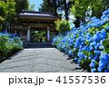 紫陽花 あじさい寺 雲昌寺の写真 41557536