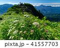 雨飾山 風景 高山植物の写真 41557703
