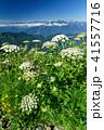 雨飾山 風景 高山植物の写真 41557716
