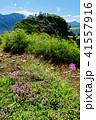 雨飾山 風景 高山植物の写真 41557916