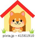 犬小屋に入っている柴犬 41561910