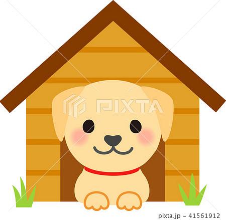 犬小屋に入っているラブラドールレトリバー 41561912