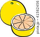 グレープフルーツ 手描き風 41562456