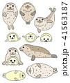ベクター 動物 アザラシのイラスト 41563187