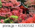 京都 秋の毘沙門堂 41563582