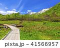 栂池自然園 41566957