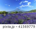富士山 ラベンダー 41569779