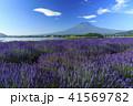富士山 ラベンダー 41569782