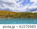 青い池 池 紅葉の写真 41570985