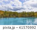 青い池 池 紅葉の写真 41570992