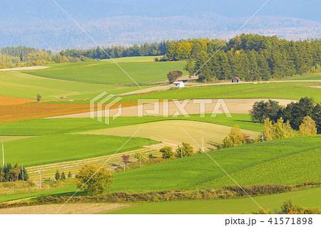 穀倉地帯 41571898