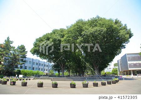 東京学芸大学 小金井市 41572305