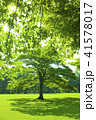 公園 芝生 木の写真 41578017