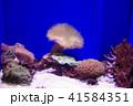 深海水族館の深海魚 41584351