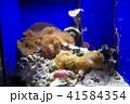 深海水族館の深海魚 41584354