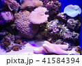 深海水族館の深海魚 41584394