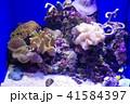 深海水族館の深海魚 41584397