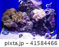 深海水族館の深海魚 41584466
