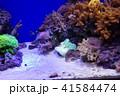 深海水族館の深海魚 41584474