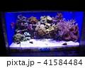 深海水族館の深海魚 41584484