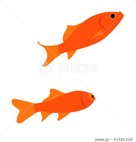 仲良く泳ぐ二匹の金魚のイラスト 41585310