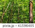 新緑 森林 エコイメージの写真 41596405
