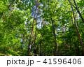 新緑 森林 エコイメージの写真 41596406