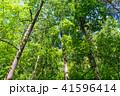 新緑 森林 エコイメージの写真 41596414