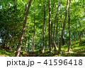 新緑 森林 エコイメージの写真 41596418