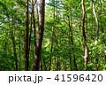 新緑 森林 エコイメージの写真 41596420