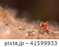 ジャパピグ 41599933