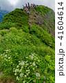 雨飾山 高山植物 登山者の写真 41604614