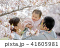 家族 春 桜の写真 41605981