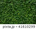 ゴーヤ 花 苦瓜の写真 41610299