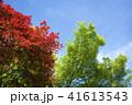二条城の場内の新緑と紅葉 41613543
