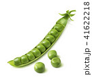 Fresh green pea pod isolated on white background 41622218